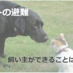 ペットの防災にも政治・行政・団体は関わっている!何をすればいい?